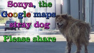 Sonya, the Google maps stray dog rescue.  Please share.