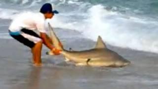 Shark Fishing On The Surf