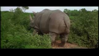 Rhino Gives Birth To Human