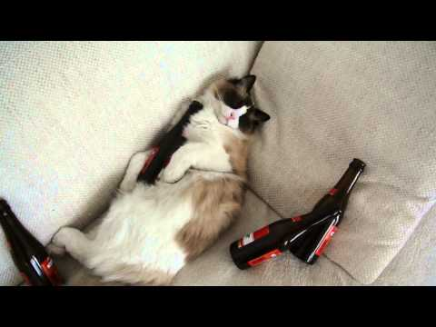 Hangover Cat (joke)