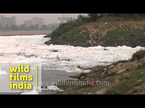 Pollution blights the Yamuna river