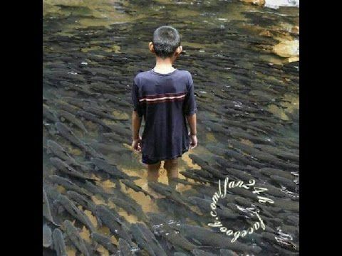 Chuyện lạ Việt Nam: Suối cá thần bí