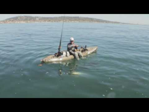 White Sea Bass Fishing from Hobie Mirage Revolution