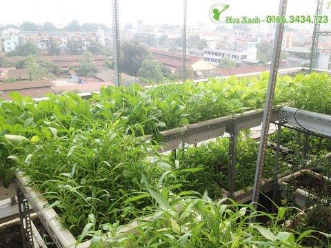 Tự trồng rau sạch tại nhà - hot nhất hiện nay