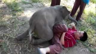 Ai chả muốn nuôi 1 chú voi như thế này :)