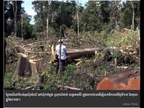 About 30 Hectares of New Forest Were Cut in Ratanakiri
