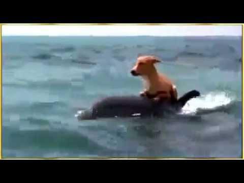 Cá heo đánh đuổi cá mập cứu chú chó nhỏ