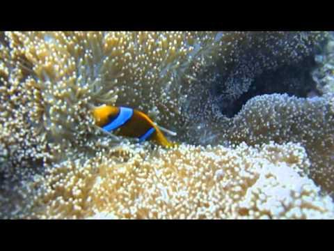جمال البحر الأحمر, سبحان الله أسماك زينة وشعاب مرجانية روعة . في أعماق البحر الأحمر .