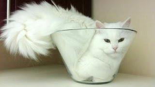 Zábavné mačky