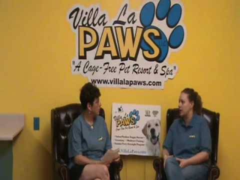 Summer Dog Grooming: Pet Grooming Tips from Villa La PAWS