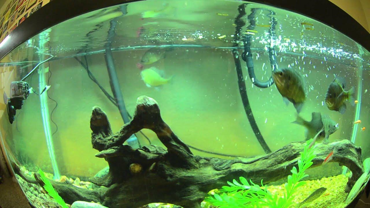 Cool Pet Fish Maxresdefault.jpg