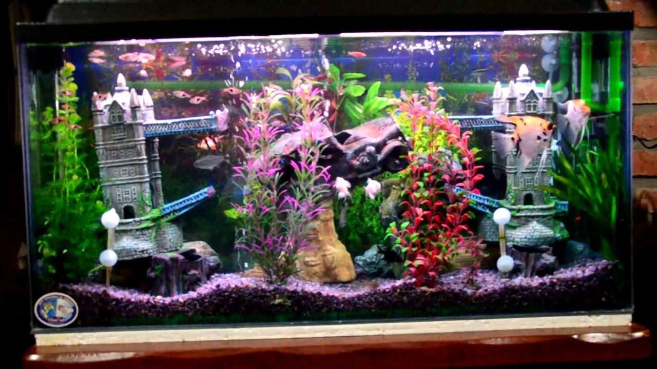 Mi acuario peces de aguas tropicales 150 litros hd i jab for Casas decoradas con plantas naturales