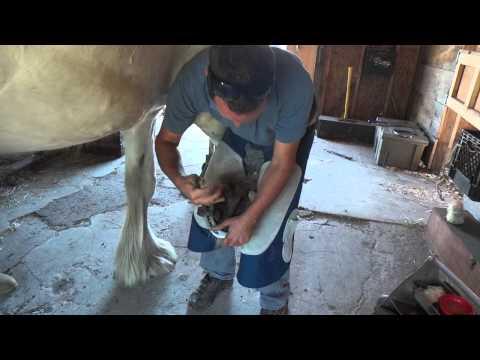Pulling big shoes. - Draft Horse
