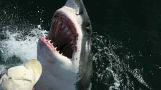 Incredible Shark/Human Love Story Aussie Fisherman