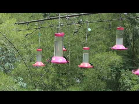 Special Events | San Vito Bird Club