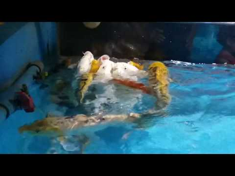 Funny Fish. New Fish video.Awesome fish.Fishing Video 2019