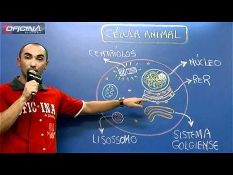Célula Animal e Vegetal - Diferenças