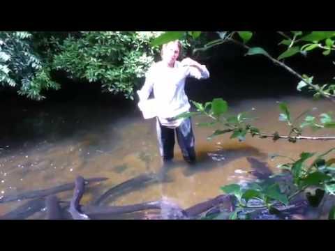 İlginç - Yılan Balıklarını Besleyen Kadın
