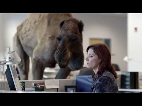 Geico Camel Hump Day Woot Woot Copy of Geico Hump Day Camel
