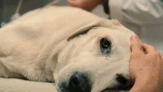 Top 10 Saddest Animal Deaths in Movies
