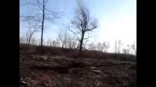 Pe malul Prutului se taie copacii şi lasă pustiu