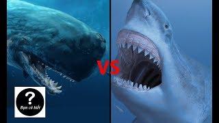 Megalodon vs Livyatan Melvillei, con nào sẽ thắng #26    Bạn Có Biết?
