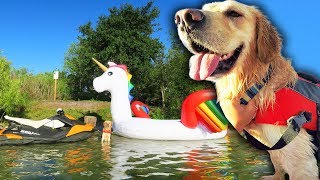 DOG RIDES GIANT UNICORN FLOAT TO PRIVATE ISLAND