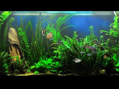 37 dream aquarium fish tank backgrounds youtube for Youtube fish tank