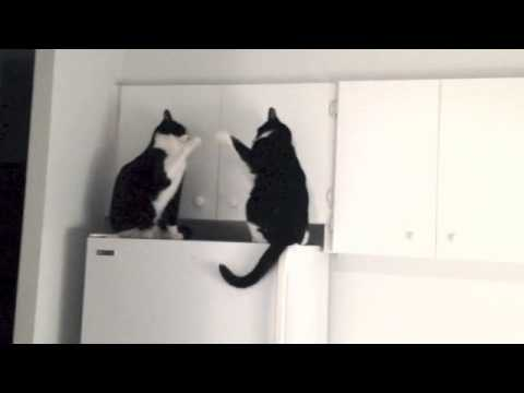 Cats Sing and Patty Cake Happy Birthday Song