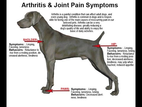 Does Your Dog Have Dog Arthritis Symptoms?-Get The Glucosamine For Dogs and Cats!