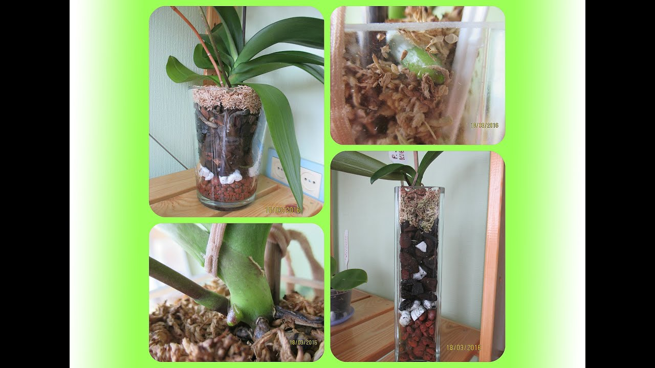 Реанимация для орхидеи в домашних условиях