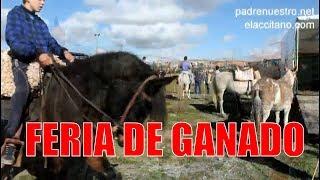 Feria De Ganado (Caballos, Burros, Ponis)