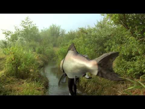 Salmon Safe Sal's Journey