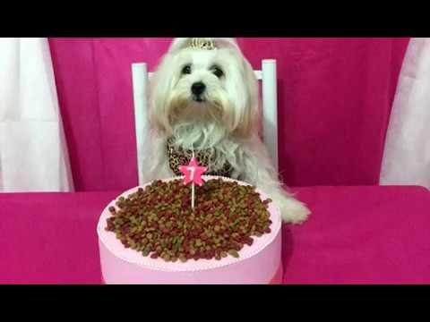 Gratidão: cachorrinha ganha festa de aniversário