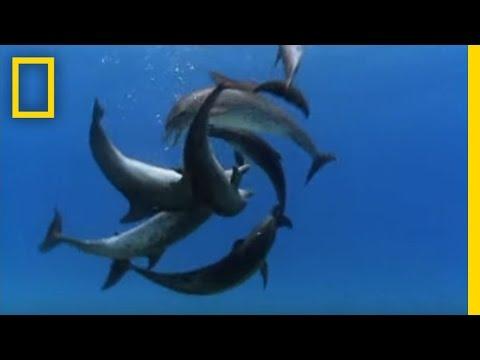 Rissa tra delfini