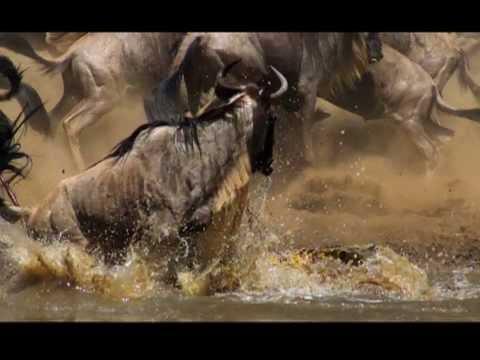 BBC | Kuş Bakışı Dünya: Afrika | 720p |