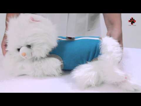 Roupa Pós-Cirúrgica Exclusiva para Gatos