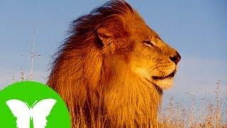 Conocimiento del medio: Los animales vertebrados