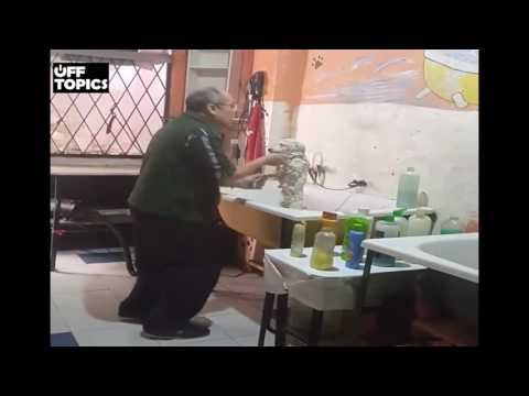 World's Happiest Dog Groomer Boogie With a Canine Client - Funny Video