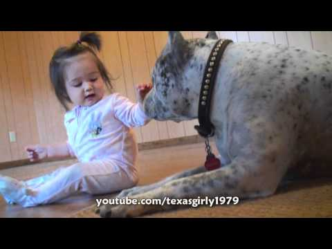 Pit Bull Sharky ATTACKS Baby Girl with KiSSES!!! PitBull DOG vs BABY.HelensPets.com, http://HelensPets.com/ Pit Bull Sharky meeting very first time so young baby girl. Jacqueline is my friends Kirsi and John's 10 month old daughter, they were...