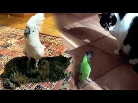 Try Not To Laugh Challenge * Funny Parrots & Cute Birds Compilation | Best Funny Parrots Videos [1]