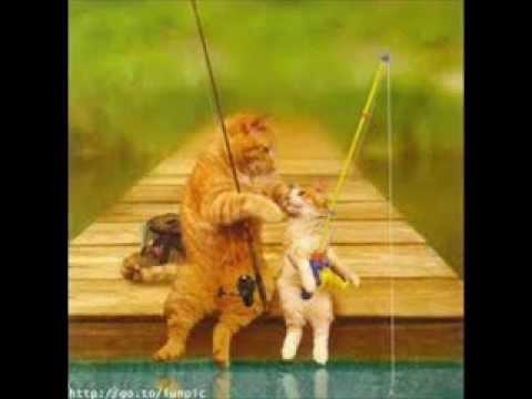 Śmieszne filmiki o kotach i psach.