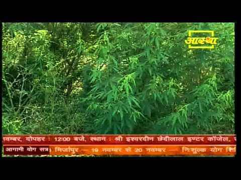 Medical Use Of Indian Hemp(Bhangh) by  Acharya Bal Krishan Ji