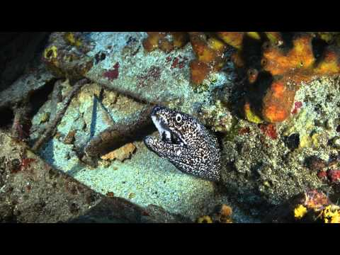 Spotted Moray Eel in the Man of War Shoal Marine Protected Area
