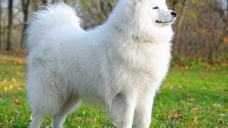 Razas de perro más caras del mundo