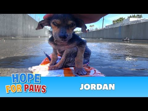 Hope For Paws - Jordan gets rescued by Eldad