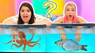 WHAT'S IN THE BOX CHALLENGE - UNDERWATER EDITION ft. Wengie