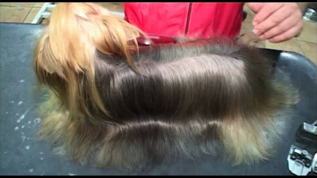 Shampoo For Yorkshire Terriers