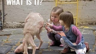 ✔ 75 Most Weird, Scary and Rarest Animals in the World Real Pictures (Rare Compilation)