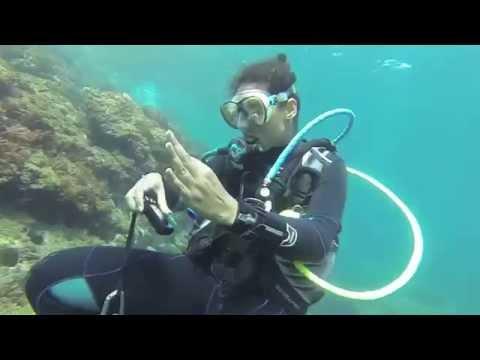 plongée sous marine deca plage Alger